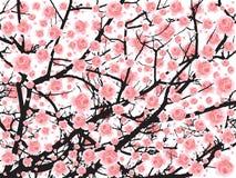 Arbre de Sakura de pleine floraison (fleurs de cerisier) BG Photo libre de droits