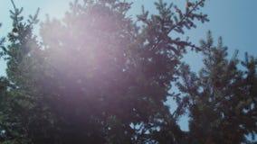 Arbre de sapin contre le ciel avec des corrections de lumière du soleil banque de vidéos