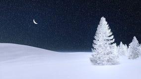 Arbre de sapin couvert de gelée la nuit hiver Image libre de droits