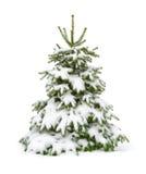 arbre de sapin couvert de neige d'isolement sur le blanc Images libres de droits