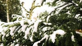 Arbre de sapin dans la forêt de parc d'hiver clips vidéos