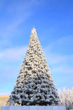 Arbre de sapin de l'hiver images libres de droits