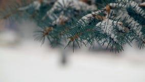 Arbre de sapin Snow-covered banque de vidéos