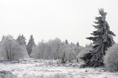 Arbre de sapin sur une clairière neigeuse de forêt photos stock