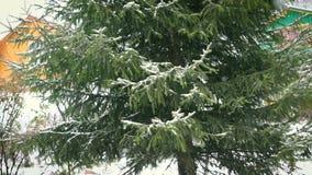 Arbre de sapin vert dans la neige banque de vidéos