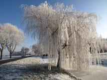 Arbre de saule figé en hiver Images libres de droits