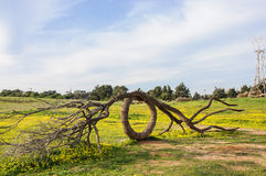 Arbre de sculpture Photographie stock