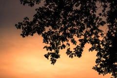 Arbre de silhouette au ciel d'aube Photos stock