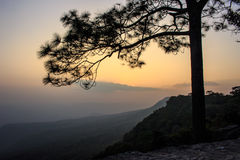 Arbre de silhouette avec le coucher du soleil Image stock