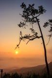 Arbre de silhouette avec le coucher du soleil Images libres de droits