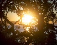 Arbre de silhouette avec le coucher du soleil au fond image libre de droits
