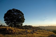 Arbre de silhouette de Johannesburg Photo stock