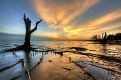 Arbre de silhouette pendant le moment de coucher du soleil image libre de droits