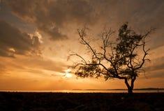 Arbre de silhouette pendant le moment de coucher du soleil images libres de droits