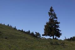 Arbre de solitaire dans les Alpes Photos libres de droits