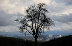 Arbre de solitude sur une colline images stock