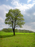 Arbre de source photo stock
