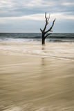 Arbre de squelette d'île de chasse Photo libre de droits