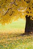 arbre de stationnement d'automne Image libre de droits