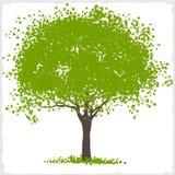 Arbre de tache de vert de vecteur Photos libres de droits