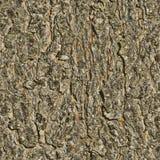 Arbre de texture de fond Texture sans joint images stock