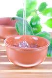 arbre de thé de pétrole Photographie stock