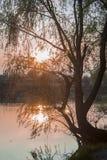 Arbre de tilleul avec le coucher du soleil de fond Images stock