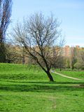 Arbre de Tlonely en parc Image libre de droits
