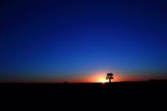 Arbre de tremblement à la province Afrique du Sud du Cap-du-Nord de coucher du soleil image stock