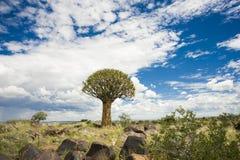Arbre de tremblement en Namibie Image stock