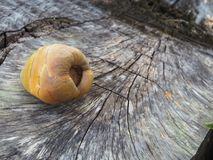 Arbre de tronçon de coco sur la plage Photo stock