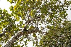 Arbre de tronc avec une branche et une feuille Photographie stock