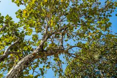 Arbre de tronc avec une branche et une feuille Image stock
