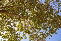 Arbre de tronc avec une branche et une feuille Photographie stock libre de droits