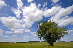 arbre de zone photos libres de droits