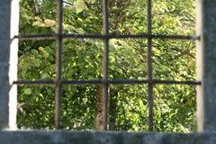 Arbre derrière des grilles Image libre de droits