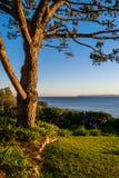 Arbre donnant sur l'océan pacifique au crépuscule photos libres de droits