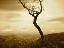 Arbre du Costa Rica Image libre de droits