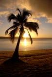 Arbre du paradis Image libre de droits