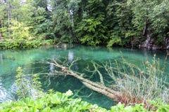 Arbre du pays des merveilles de nature de lacs Plitvice sous l'eau Image stock