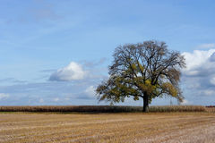 Arbre en automne photo stock