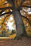 Arbre en automne Image stock