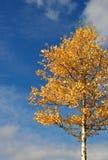 Arbre en automne d'automne Photographie stock libre de droits