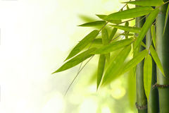 Arbre en bambou Photos stock