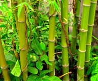 Arbre en bambou Image libre de droits