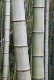 Arbre en bambou Image stock