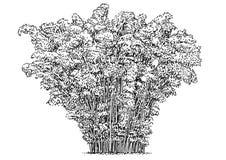 Arbre en bambou, buisson, illustration, dessin, gravure, encre, schéma, vecteur illustration de vecteur