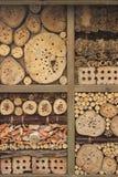 Arbre en bois Image libre de droits