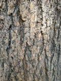 Arbre en bois de texture Images stock