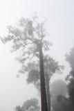 Arbre en brouillard Image stock